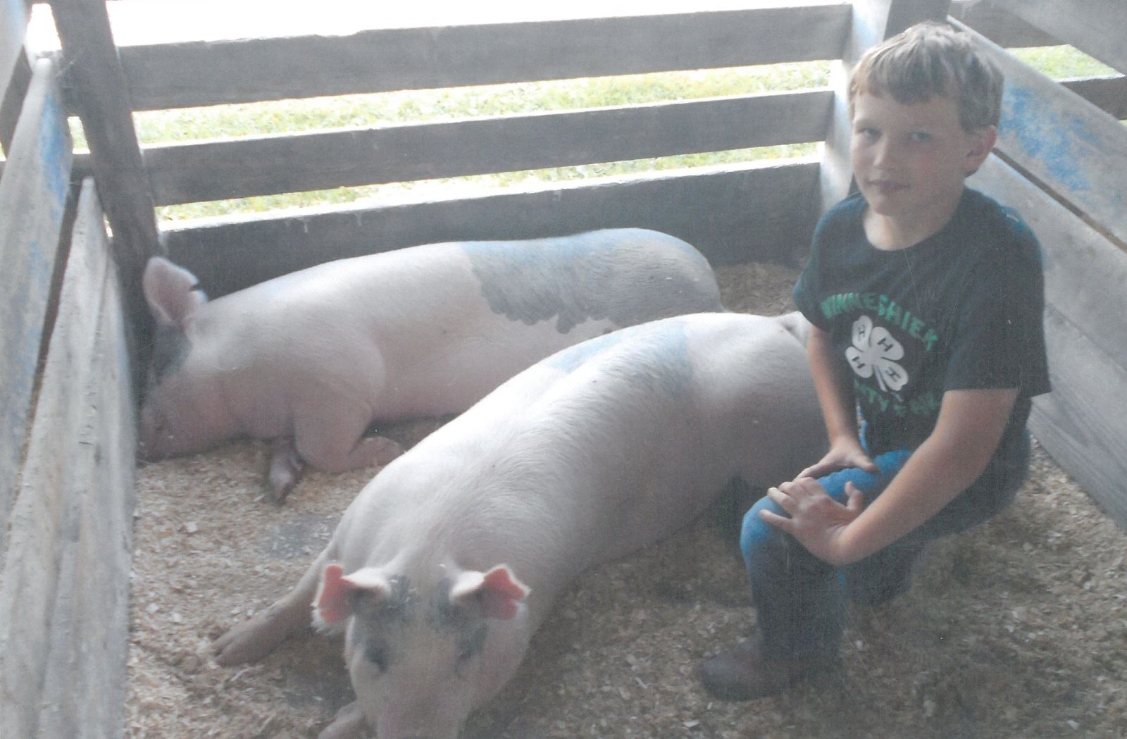 Dalton Zidlicky with his swine project